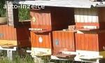 Včelí oddělky 2020