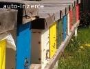 Včelí oddělky