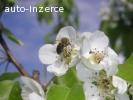 Vyzimovaná včelstva Brno